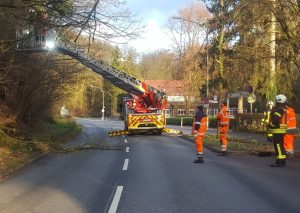 Eine Stunde dauerte es, bis der Baum an der Talstraße gefällt war. Foto: Stadt Mettmann