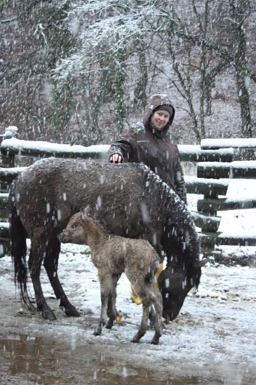 Stute Merle mit Fohlen Merida und Tierpflegerin Lotte Becker. Foto: Kreis Mettmann