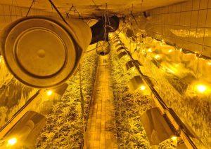 Einer von mehreren Räumen der Cannabis-Plantage. Foto:  Polizei