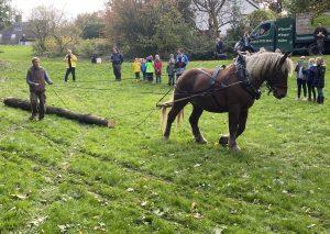 Zwei Kaltblüter schleppten die Baumställe im Grünzug Ellenbeek an die vorgesehenen Plätze. Foto: TME